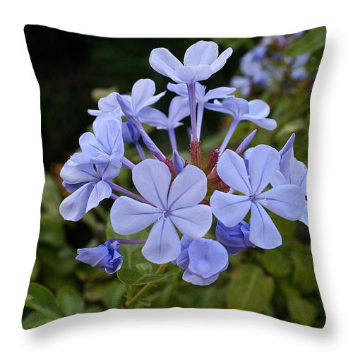 Outdoors Throw Pillow featuring the photograph Leadwort by Susan Herber