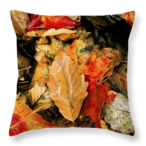Natural World Throw Pillow featuring the photograph Leaf Fresco by Barbara Northrup