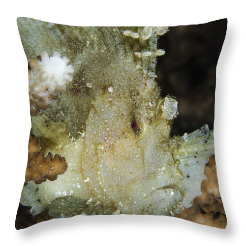 Ocean Throw Pillow featuring the photograph Leaf Scorpionfish, Indonesia by Todd Winner