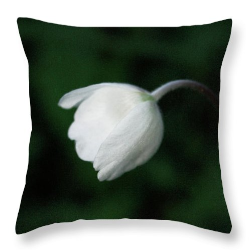 Flowers Throw Pillow featuring the photograph Leaning Anemone by The Artist Project