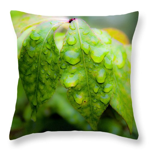 Macro Throw Pillow featuring the photograph Leaves With Water Drops by Lee Santa