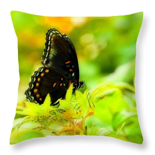 Yellow Throw Pillow featuring the photograph Lemon Lime Butterfly by Sheri Bartoszek