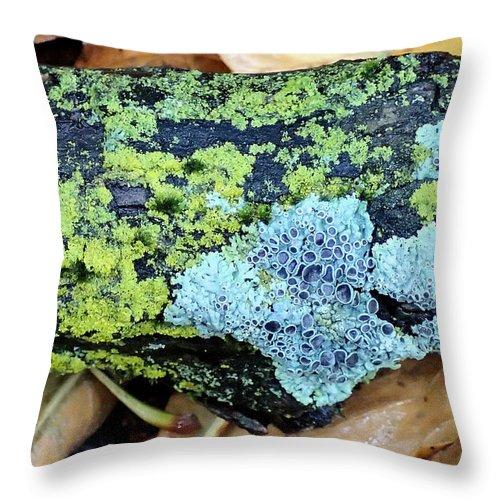 Lichen Throw Pillow featuring the photograph Lichen On Fallen Branch by Doris Potter