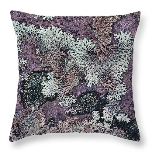 Lichen Throw Pillow featuring the photograph Lichen Pattern Series - 57 by Heiko Koehrer-Wagner