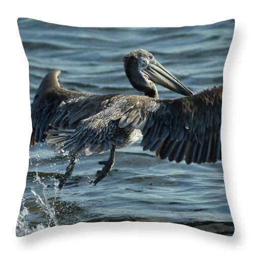 Pelican Throw Pillow featuring the photograph Lift Off by Ernie Echols