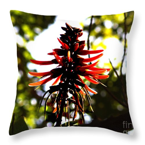 Fine Art Print Throw Pillow featuring the photograph Light Play IIi by Patricia Griffin Brett