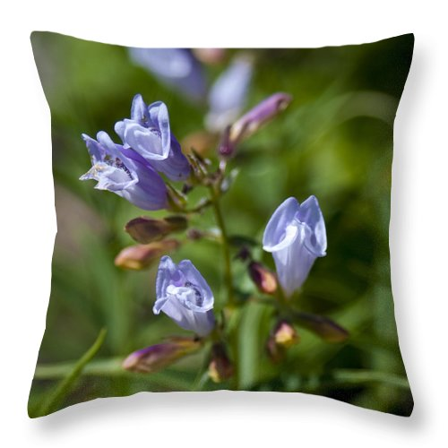 Light Purple Wild Penstemons Throw Pillow featuring the photograph Light Purple Wild Penstemons by Paul Cannon