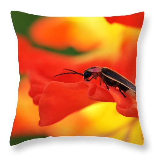 Firefly Throw Pillow featuring the photograph Lightning Bug On Gladiolus by Thomas R Fletcher