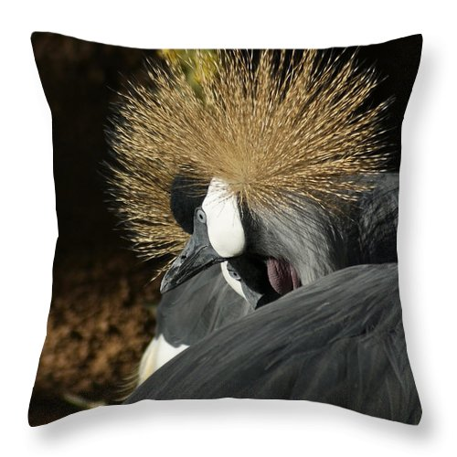 East African Crowned Crane Throw Pillow featuring the photograph Like My Hair by Ernie Echols