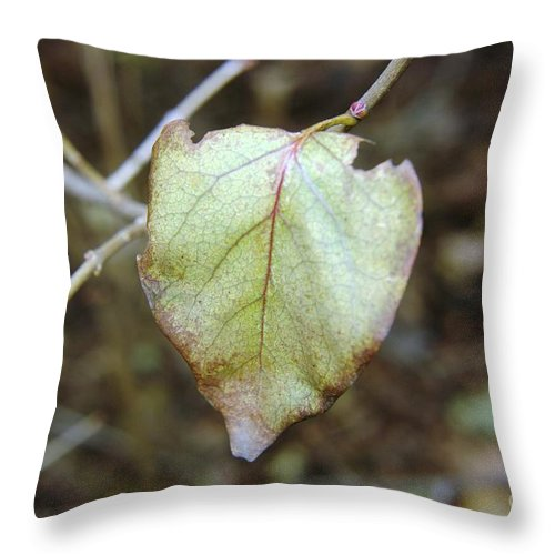 Leaves Throw Pillow featuring the photograph Like The Last Brave Soldier by Jeff Swan