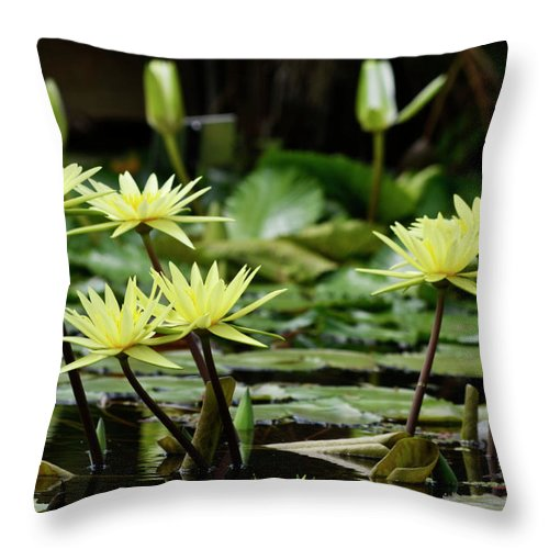 Water Lily Throw Pillow featuring the photograph Lily And Friends by Melanie Moraga