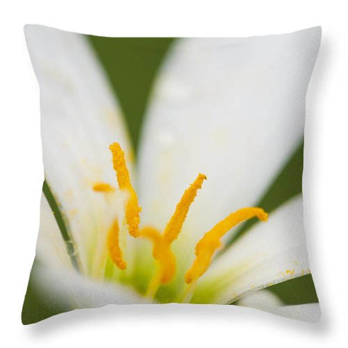 Art Throw Pillow featuring the photograph Lily by Ivy Ho