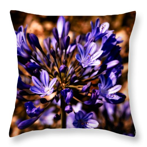 Agapanthus Africanus Throw Pillow featuring the photograph Lily Of The Nile by Venetta Archer