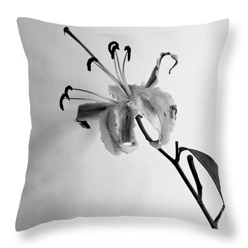 Flower Throw Pillow featuring the photograph Lily by Pravine Chester