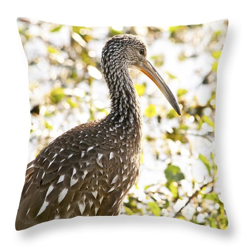 Limpkin Throw Pillow featuring the photograph Limpkin Luster by Steven Sparks