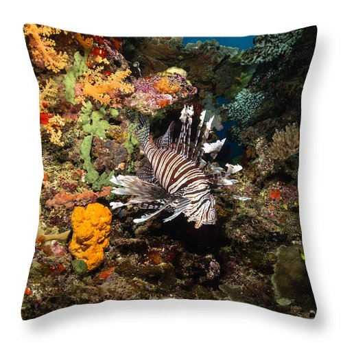 Lionfish Throw Pillow featuring the photograph Lionfish, Fiji by Todd Winner