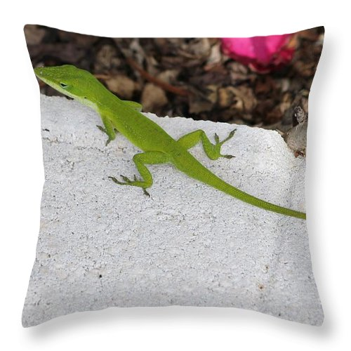 Wildlife Throw Pillow featuring the photograph Little Green Lizard by Michelle Powell