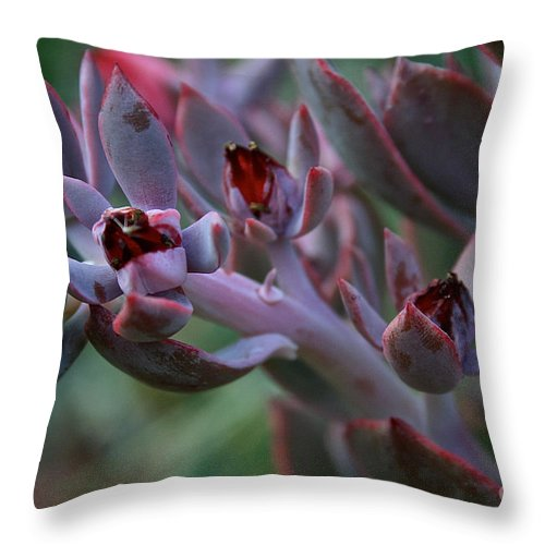 Outdoors Throw Pillow featuring the photograph Little Red Blossoms by Susan Herber