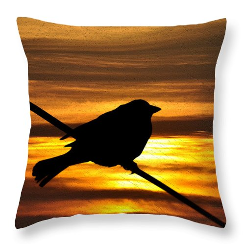 Little Throw Pillow featuring the photograph Little Sparrow by Bill Cannon