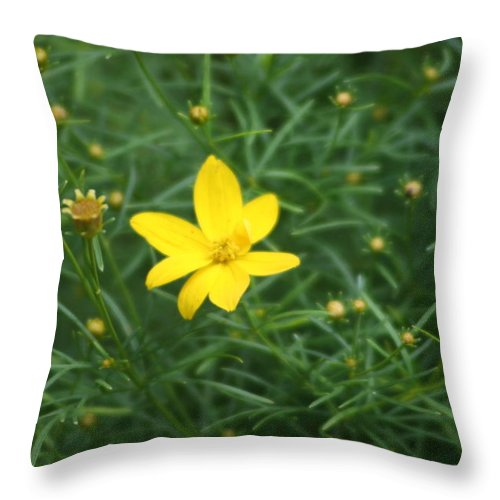Photo Throw Pillow featuring the photograph Littlest Daisies by Barbara S Nickerson