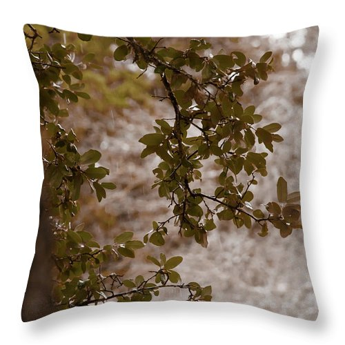 Kelly Rader Throw Pillow featuring the photograph Live Oak In Shower by Kelly Rader