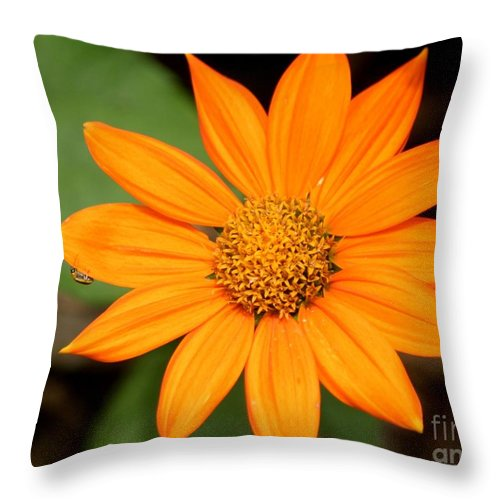 Floral Throw Pillow featuring the photograph Living Life On The Edge by Living Color Photography Lorraine Lynch