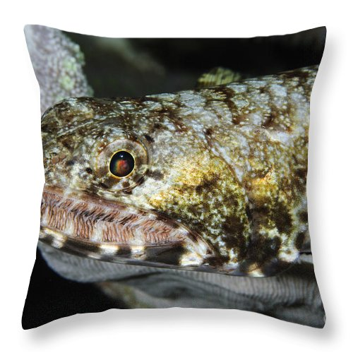 Lizardfish Throw Pillow featuring the photograph Lizardfish, Indonesia by Todd Winner