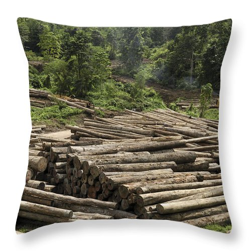 Mp Throw Pillow featuring the photograph Logs In Logging Area, Danum Valley by Thomas Marent