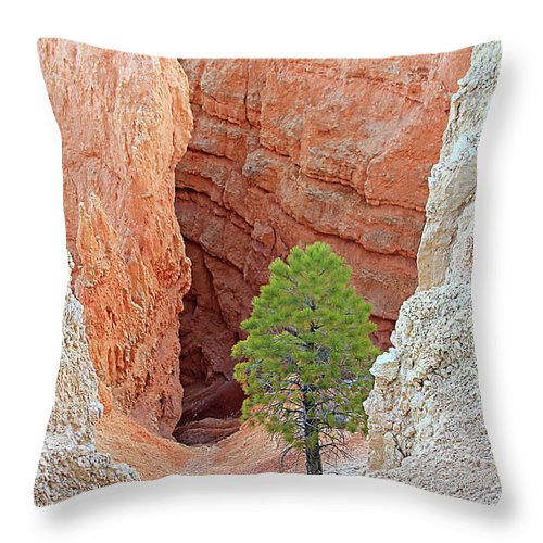 Bryce National Park Throw Pillow featuring the photograph Lone Tree At Bryce National Park by Jack Schultz