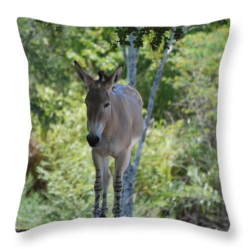 Animal Throw Pillow featuring the photograph Lonely by Rob Hans