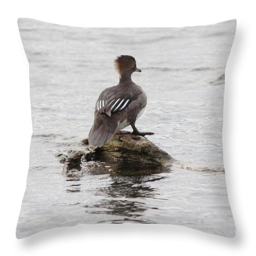Hodded Throw Pillow featuring the photograph Looking Out by Lori Tordsen
