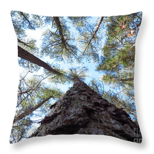 Trees Throw Pillow featuring the photograph Looking up by Rrrose Pix