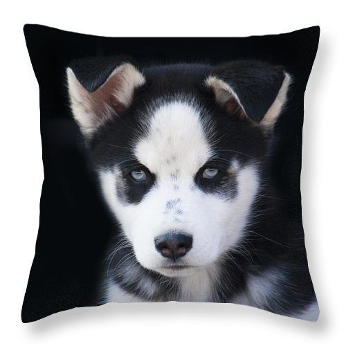 Lop Eared Throw Pillow featuring the photograph Lop Eared Siberian Husky Puppy by Kathy Clark