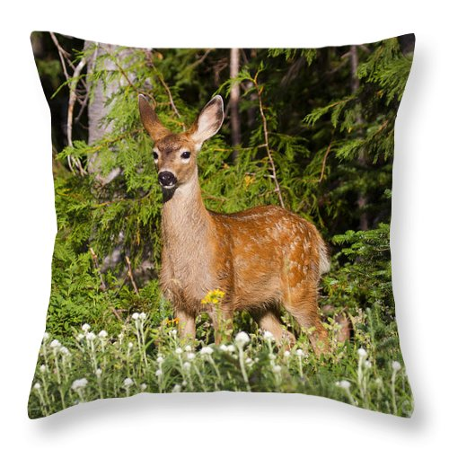 Fawn Throw Pillow featuring the photograph Losing The Spots by Mike Dawson