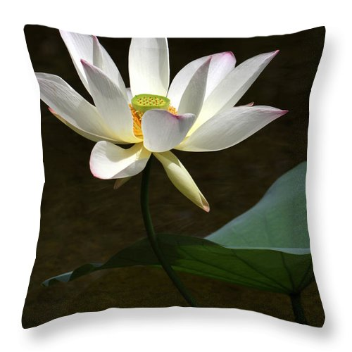 Lotus Throw Pillow featuring the photograph Lotus Beauty by Sabrina L Ryan