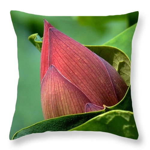 Nature Throw Pillow featuring the photograph Lotus Bud--bud In A Blanket Dl049 by Gerry Gantt