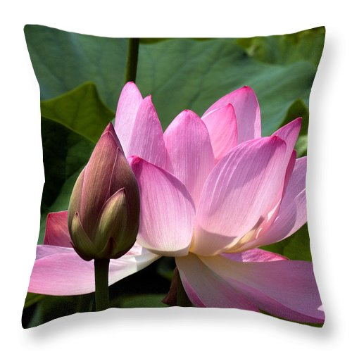 Nature Throw Pillow featuring the photograph Lotus Bud--here Is How You Do It Dl065 by Gerry Gantt
