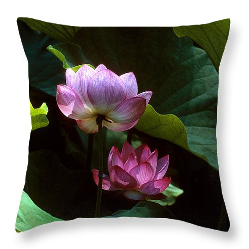 Nature Throw Pillow featuring the photograph Lotus--dimensions 20h by Gerry Gantt