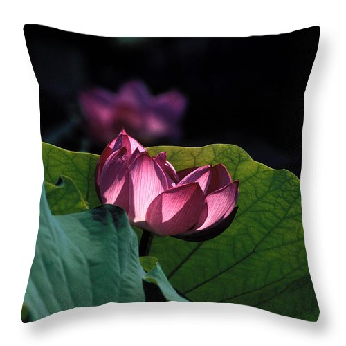 Nature Throw Pillow featuring the photograph Lotus--echoes Of Light 24h by Gerry Gantt