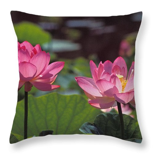 Nature Throw Pillow featuring the photograph Lotus Pair 24m by Gerry Gantt