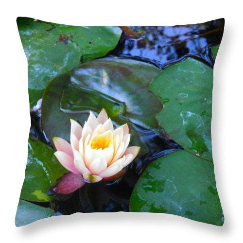 Lotus Throw Pillow featuring the photograph Lotus by Sarah Vandenbusch