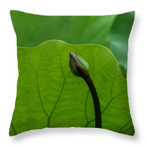 Nature Throw Pillow featuring the photograph Lotus-sheltering The Future Dl032 by Gerry Gantt