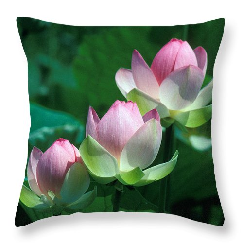 Nature Throw Pillow featuring the photograph Lotus--stepping Stones 24p by Gerry Gantt