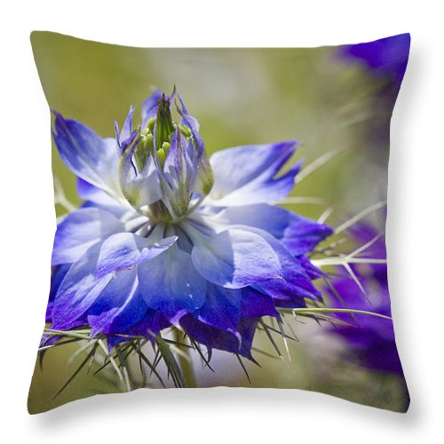 Nigella Throw Pillow featuring the photograph Love In The Mist - Nigella by Kathy Clark