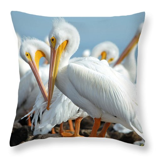 Pelicans Throw Pillow featuring the photograph Love Is In The Air... by Maria Nesbit