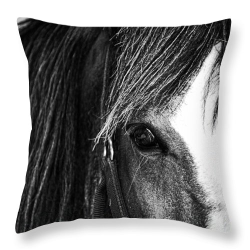 Horse Throw Pillow featuring the photograph Love Me by Traci Cottingham