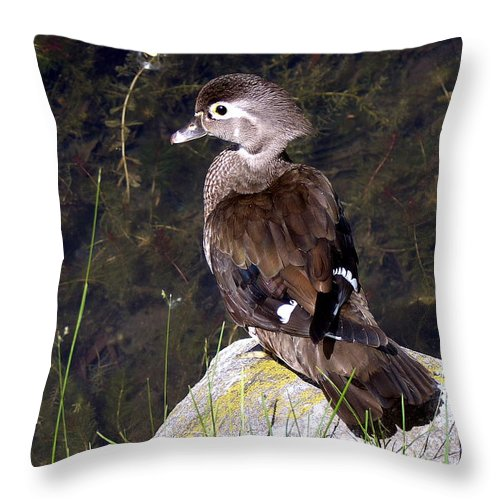 Bird On Rock Throw Pillow featuring the photograph Lovely To Look At by Burney Lieberman