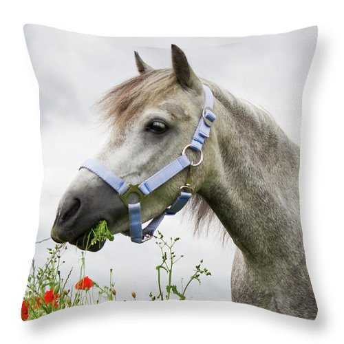 Welshpony Throw Pillow featuring the photograph Lulu In The Poppy Field by Angela Doelling AD DESIGN Photo and PhotoArt
