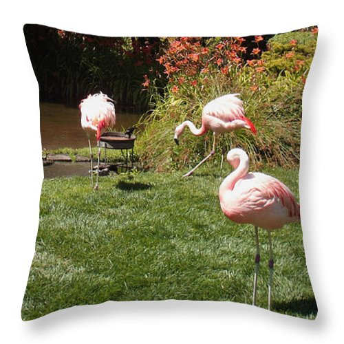 Lunch Meeting Throw Pillow featuring the photograph Lunch Meeting by Methune Hively