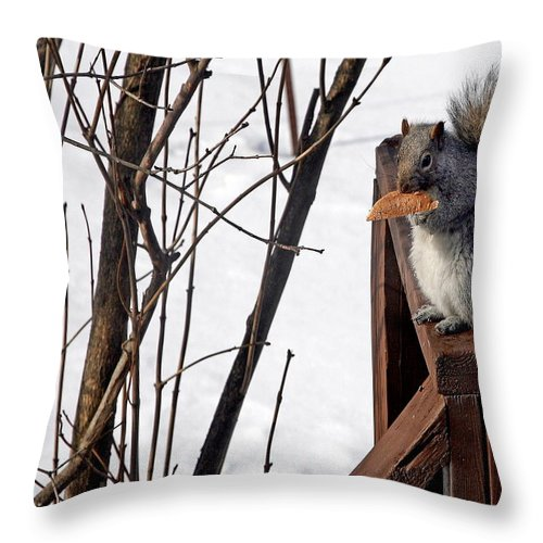 Squirrel Throw Pillow featuring the photograph Lunchtime by Burney Lieberman